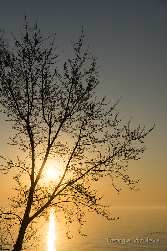 A Filigree of Branches Framing the Sunrise by Georgia Mizuleva