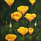 California Poppy by Veikko  Suikkanen