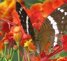 butterfly II - mariposa by Bernhard Matejka