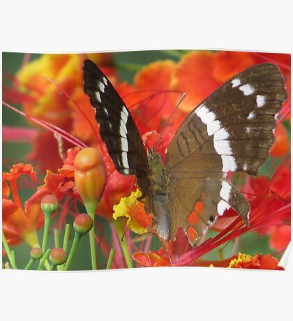 butterfly II - mariposa Poster