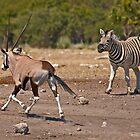 Rumble over the waterhole by Konstantinos Arvanitopoulos