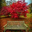 Autumn Colours by Adrian Evans