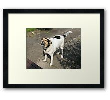 Sorry, no biscuits!  Framed Print