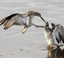 Fight by webbo
