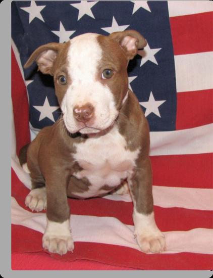 I'm All American by Ginny York