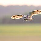 Long-eared Owl by Remo Savisaar