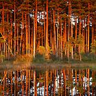 Pine trees at sunset by Remo Savisaar