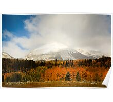 Fall Colors and Evergreens in snow Colorado Poster