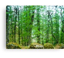 Forest green with rocks and drops of water Canvas Print