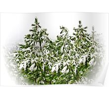 pine trees with snowflakes in soft white frame Poster