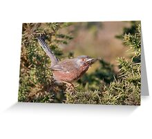 Dartford Warbler Greeting Card