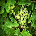 Grapes and Leaves by Mary Ann Reilly
