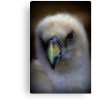 Portrait of a Griffon Vulture Canvas Print