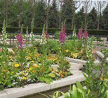 Foxglove in Heritage Garden by Kathie  Chicoine