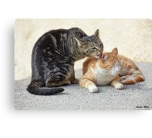 Cuddly grooming Canvas Print