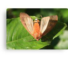 Moth on a Leaf Canvas Print