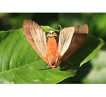Moth on a Leaf Photographic Print