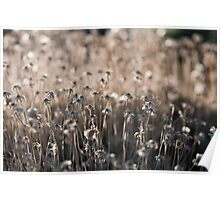 Wilted flowers Poster