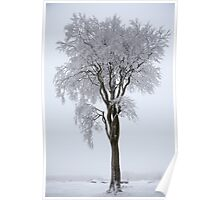 Trees covered in snow Poster