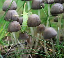 Fungus by wistine