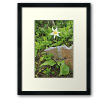 Avalanche Lily Framed Print