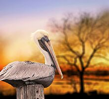 Brown Pelican at Rest by Bonnie T.  Barry