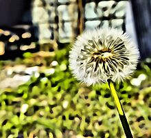 Dandelion Linen / Canvas Digital Painting by nhk999