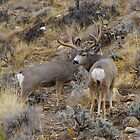 Utah Monster Muley by Tim Harper