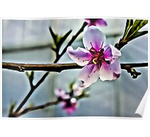 Fruit Tree Blossom Linen / Canvas Digital Painting Poster
