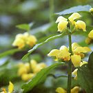 Yellow Archangel by Linda  Makiej