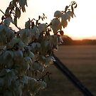 Yucca-West Wimmera by Diana-Lee Saville