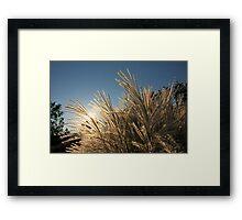 Tall Grass and Sunset Framed Print