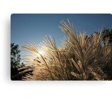 Tall Grass and Sunset Canvas Print