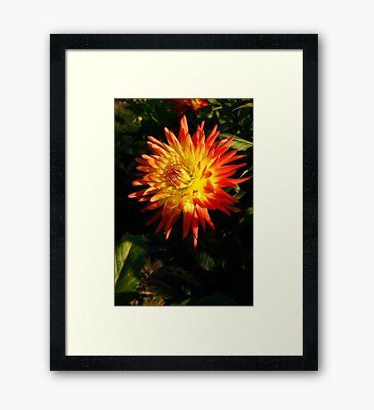 Multi Colored Flower Framed Print
