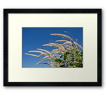 Long Grass and Blue Sky Framed Print