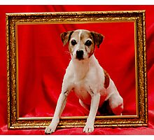 Jack Russell Photographic Print