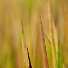 Fall Grass by Steve Mills