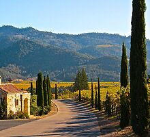 A Napa View by Barbara  Brown