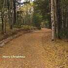 Merry Christmas (7) by dfrahm