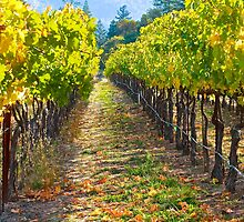 Vineyard Light by Barbara  Brown