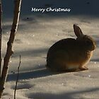 Merry Christmas (10) by dfrahm