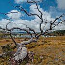 Lake Windermere, Tasmania by Erik Schlogl