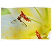 Pollen Feeder Poster