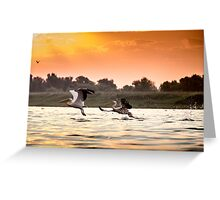 The pelicans from Danube Delta Greeting Card