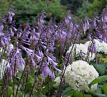 White and purple flowers  by Rayvh