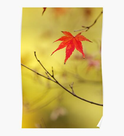 just one red momiji leaf Poster