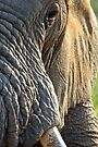 Morning wrinkles by Explorations Africa Dan MacKenzie