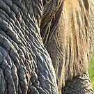Morning wrinkles by Explorations Africa Dan MacKenzie