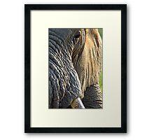 Morning wrinkles Framed Print