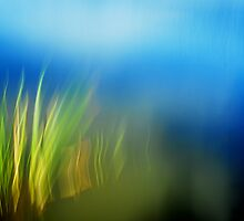 Artscape The Reed by Imi Koetz